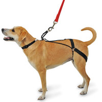 The Canine's Tug Preventing Harness - Hammacher Schlemmer