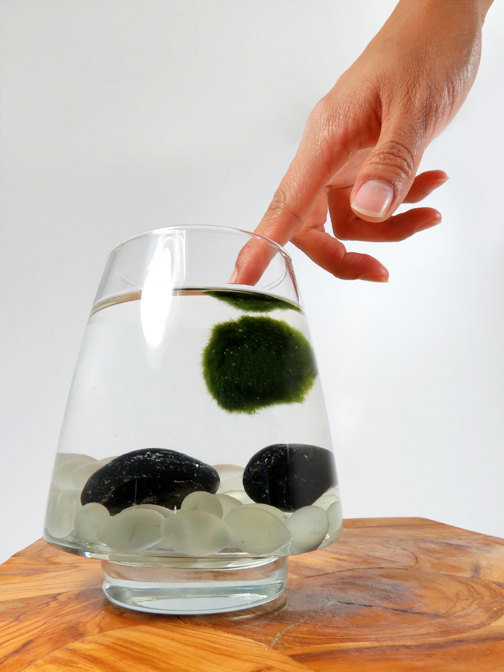 Marimo Pet in the Frosted Lake by wendiland on Etsy