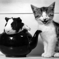 Pinkie the Guinea Pig and Perky the Kitten Tottenahm London, September 1978 Photographic Print at Art.com