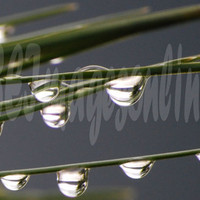 Raindrop Reflections by seimagesonline on Etsy