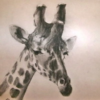Giraffe Art Print by larkinjane