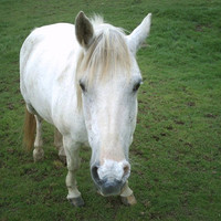 "Horse Pony Photographic Print 6""x 4.5"" Wildlife Nature Animal Pet Photography"