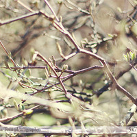 Spring branches photography - nature home decor