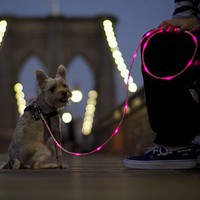 The Pup Crawl Lights-Up Leash