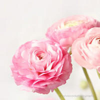 "shabby chic home decor, ""Ranunculus trio"", Ranunculus flowers, still life, floral photography"