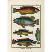 One Kings Lane - A Vintage Marine Mood - Fish  Print, C. 1770