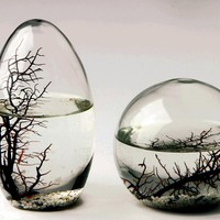 Aquatic Ecosystem Sphere