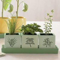 italian herb garden from RedEnvelope.com