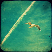 Fly Away Home Stretched Canvas by RDelean | Society6