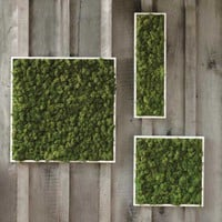 Moss Wall Art - VivaTerra