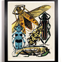 The Insect Collection 2 Beetles Antique Illustration  8 x 10 Giclee Art Print Upcled Collage Recycled Book Art Buy 2 Get 1 FREE