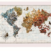"""Butterfly Migration"" wall map"