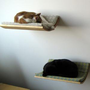 Curve Pet Bed - Home &amp; Office - Yanko Design