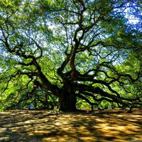 Angel Oak 003 Photograph by Lance Vaughn - Angel Oak 003 Fine Art Prints and Posters for Sale