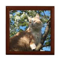 Sahara Cat In A Tree Keepsake/Jewelry Box from Zazzle.com