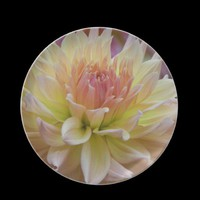 Bedazzling Dahlia Plate from Zazzle.com