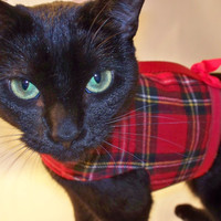 CoolCats Harness | Red Plaid Flannel