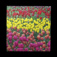 Tulip Garden Napkins from Zazzle.com