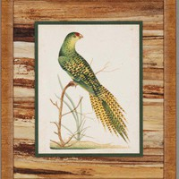 "Paragon Tropical Birds by Nodder Traditional Art (Set of 2) - 29"" x 25"" - 7950 - All Wall Art - Wall Art & Coverings - Decor"