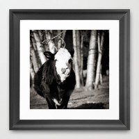 Cowlick Framed Art Print by Christine Hall