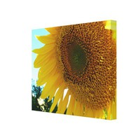 Canvas print - Sunflower and bee from Zazzle.com