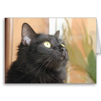 Black Cat Profile, blank note cards from Zazzle.com