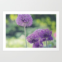 Spring Alliums  Art Print by Shilpa