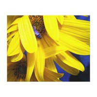 Blue Bee On Yellow Sunflower Wrapped Canvas Gallery Wrapped Canvas from Zazzle.com
