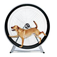Gopet Treadwheel - Indoor / Outdoor Exercise For Large Dogs