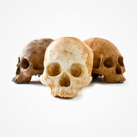 Chocolate Skulls at Firebox.com