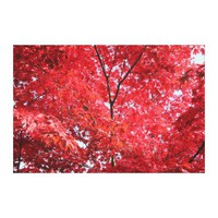 Bright Red Japanese Maple Tree Stretched Canvas Prints from Zazzle.com