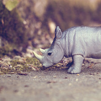 Rhinoceros photography, Rhino photography, Woodland photography, Animal photography, Nature photography,Fine Art Photography 5x7, 8x12 print