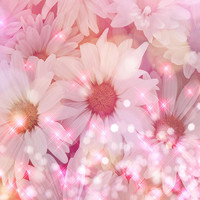 Daisy Sparkles Photograph by Debra  Miller - Daisy Sparkles Fine Art Prints and Posters for Sale