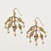 Anthropologie - Dew Drop Earrings