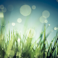 Grass  Art Print by Christian Solf