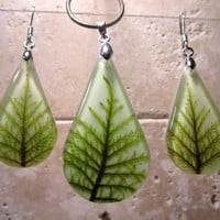Stair Step Moss (Hylocomium splendens) aka Mountain Fern Moss Necklace