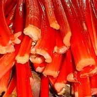 25 VICTORIA RHUBARB (Pieplant) Rheum Rhabarbarum Fruit Vegetable Seeds:Amazon:Patio, Lawn & Garden