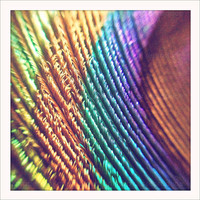 Colorful Peacock Feather 5x5 Retro Square Metallic by artstudio54