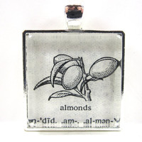 Vintage Dictionary Illustration Pendant -- Almonds -- in Glass Tile Square