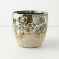 Umbellifers Herb Pot, Large Cup