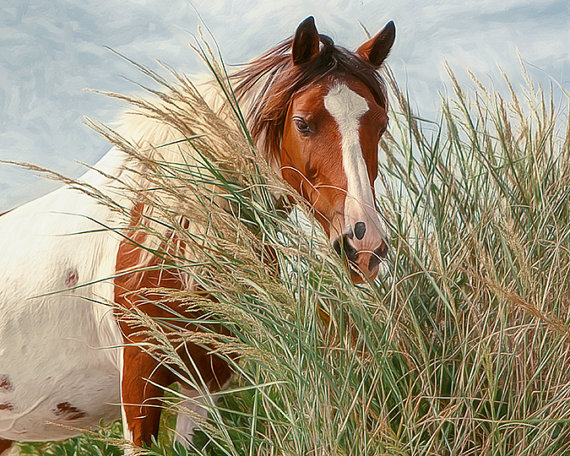Beautiful Horse On The Beach Wild Horse From Lmlphoto On