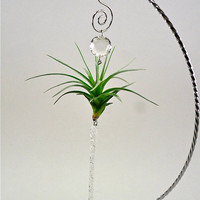 Air Plant Window Ornament Crystal Icicle  Unique by TheLivingArt