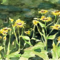 Elecampane Inula helenium Flowers in Watercolor and Pencils | Linandara - Painting on ArtFire