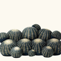 Cactus Seating by Maurizio Galante for Cerruti Baleri | Apartment Therapy