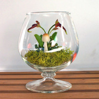 Tiny Exotic Bulbophyllum Orchid Terrarium by MissMossGifts