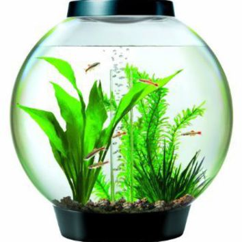 Amazon.com: Baby biOrb Aquarium with Halogen Light, Black, 4 Gallons: Pet Supplies