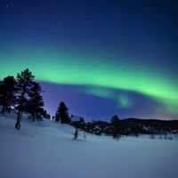 Aurora Borealis and a Shooting Star in the Woods of Troms County, Norway Photographic Print by Stocktrek Images at Art.com