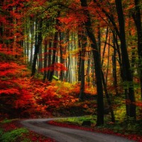 Colorful Way Photographic Print by Philippe Sainte-Laudy at Art.com