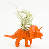 Small Dinosaur Planter with Air Plant Room Decor, Triceratops, College Dorm, Orange, Red, Plants and Edibles