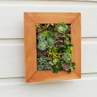 Framed Succulent Wall Art - VivaTerra